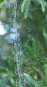 brknweb